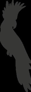Krijtbordfolie muursticker papegaai | Muur & Stickers